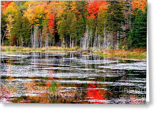 Arie Arik Chen Greeting Cards - Fall in Maine Greeting Card by Arie Arik Chen