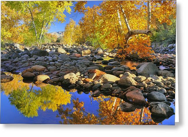 Fall In Oak Creek  Greeting Card by Dan Myers