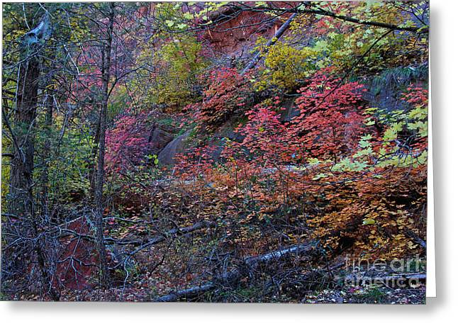 West Fork Greeting Cards - Fall In Sedona Greeting Card by Ruth Jolly