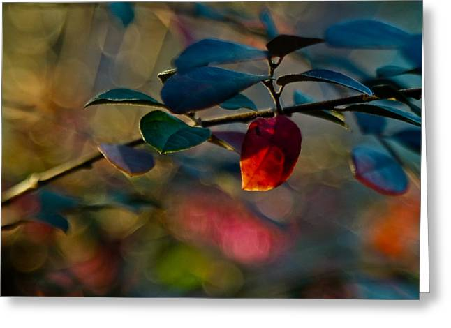 Intense Color Greeting Cards - Fall in Texas Greeting Card by Linda Unger