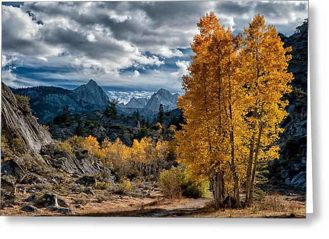 Fall in the Eastern Sierra Greeting Card by Cat Connor