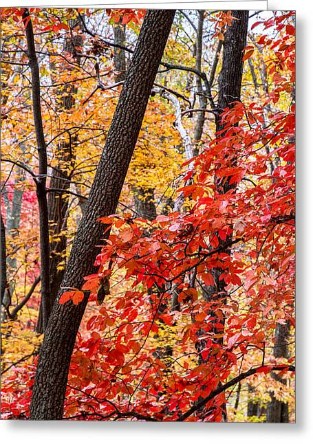 Fall In The Forest Greeting Card by John Haldane