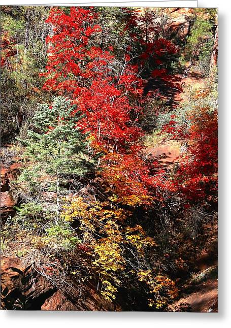 West Fork Greeting Cards - Fall in the Fork Greeting Card by Dennis Swena