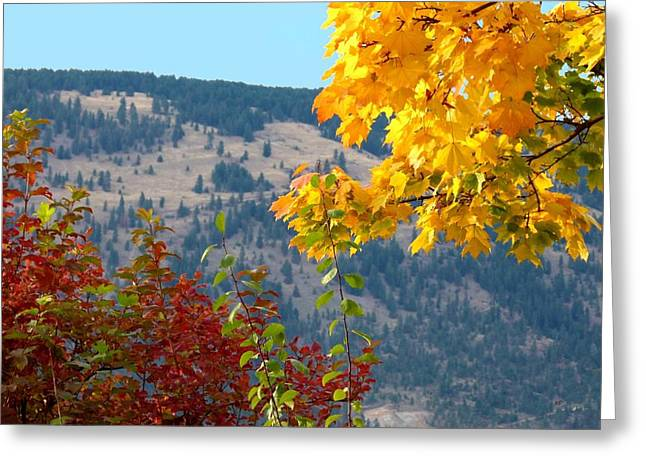 Autumn In The Country Greeting Cards - Fall In The Okanagan Valley Greeting Card by Will Borden