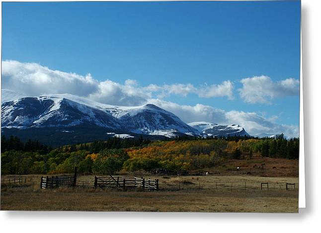 Grazing Snow Greeting Cards - Fall in the Rockies Greeting Card by Tracey Vivar