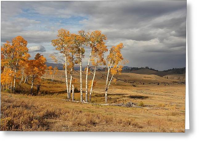 Fall Colors Pyrography Greeting Cards - Fall in Yellowstone Greeting Card by Daniel Behm