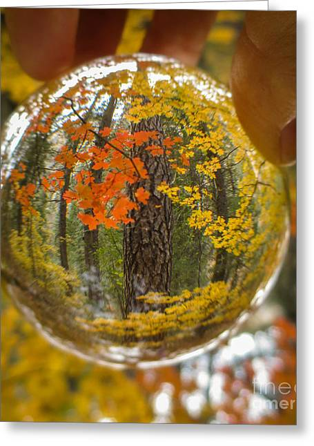 West Fork Greeting Cards - Fall in your Future 3 Greeting Card by Marianne Jensen