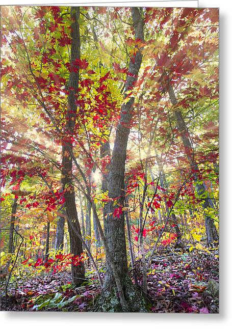 Oak Creek Greeting Cards - Fall Laser Beams Greeting Card by Debra and Dave Vanderlaan
