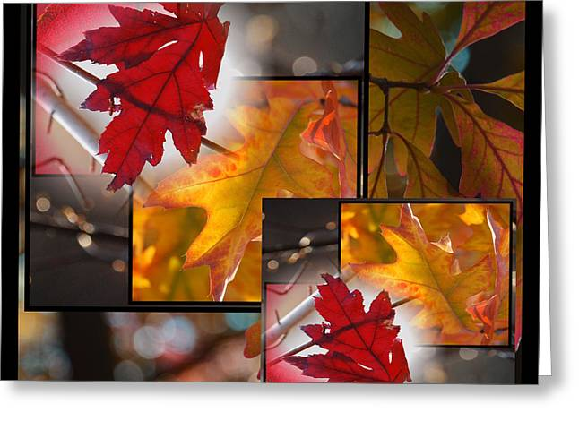 Award Winning Art Greeting Cards - Fall Leaf Collage Greeting Card by Janis Knight