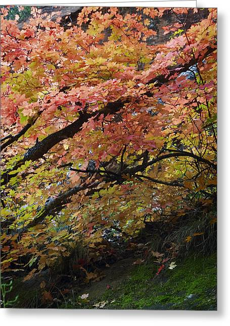 West Fork Greeting Cards - Fall Leaves at West Fork Arizona Greeting Card by Dave Dilli
