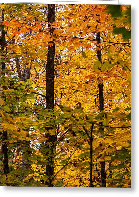 Quality Pyrography Greeting Cards - Fall Leaves in Ontario Greeting Card by Robert J Bourke