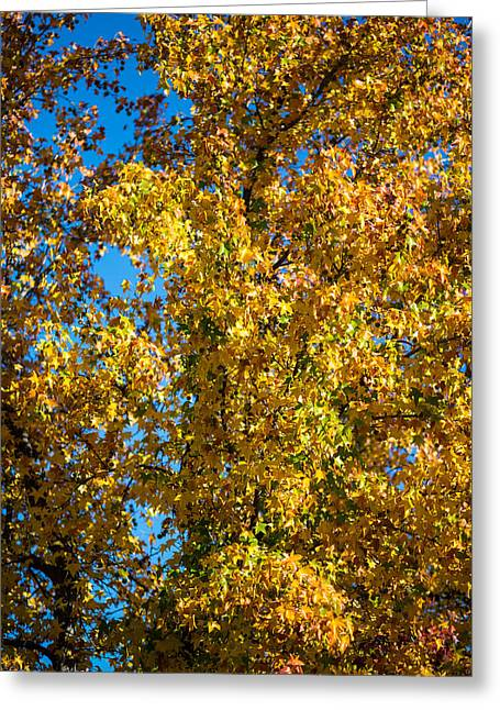 Fall Leaves Greeting Card by Mike Lee