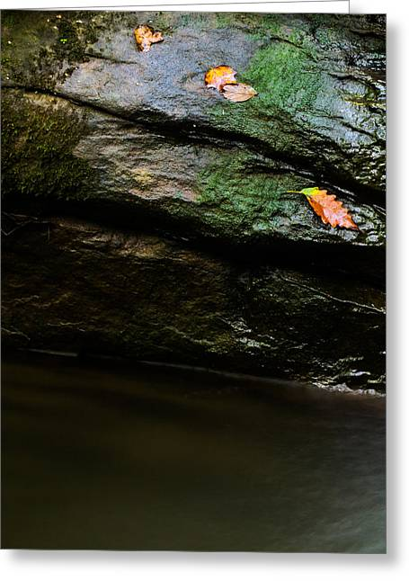 Sweat Greeting Cards - Fall Leaves Greeting Card by Shelby  Young