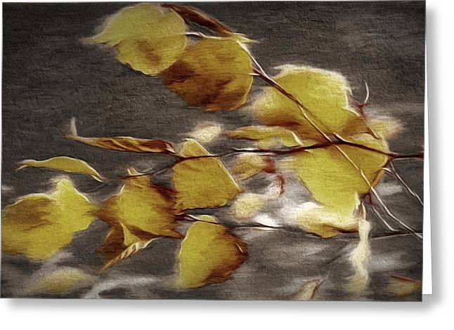 Bare Trees Mixed Media Greeting Cards - Fall Leaves Study 1 - Fall Paint 2 Greeting Card by Steve Ohlsen