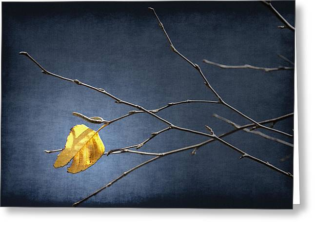 Bare Trees Mixed Media Greeting Cards - Fall Leaves Study 2 - Last Leaf Greeting Card by Steve Ohlsen