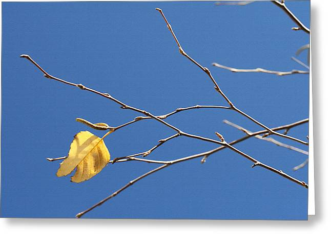 Bare Trees Mixed Media Greeting Cards - Fall Leaves Study 2 Greeting Card by Steve Ohlsen