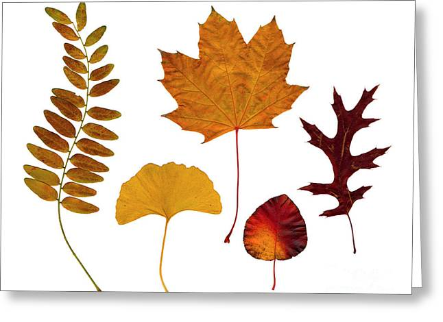 Brown Tone Greeting Cards - Fall leaves Greeting Card by Tony Cordoza
