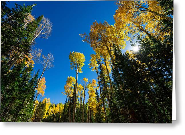 Cedar Tree Greeting Cards - Fall Light Greeting Card by Chad Dutson