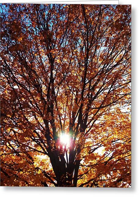 Darren Greeting Cards - Fall Light Greeting Card by Darren Robinson