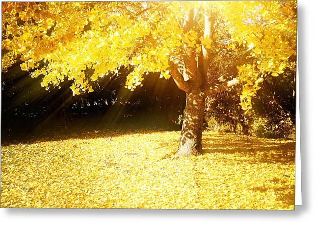 Beauty Greeting Cards - Fall light Greeting Card by Les Cunliffe
