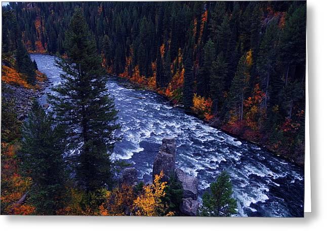Fall Lined River Greeting Card by Raymond Salani III