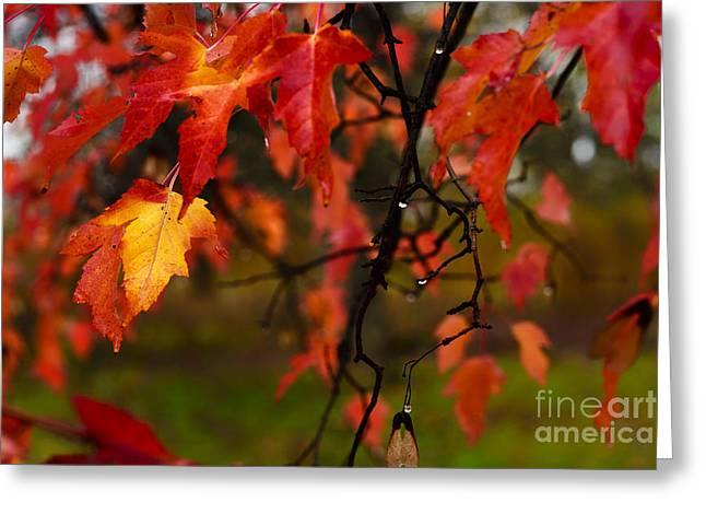 Fayette County Greeting Cards - Fall Maple Leaves in Rain Greeting Card by Thomas R Fletcher