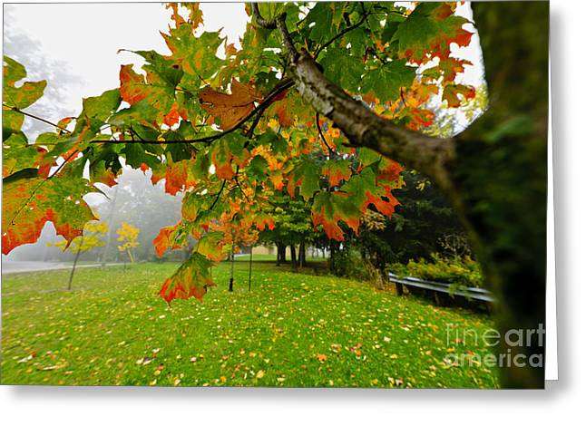 Turning Leaves Photographs Greeting Cards - Fall maple tree in foggy park Greeting Card by Elena Elisseeva