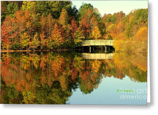 Fallscape Greeting Cards - Fall Mirrored Greeting Card by Yvette Radcliffe