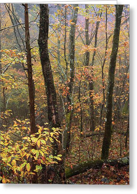 Smoky Greeting Cards - Fall Mist Greeting Card by Chad Dutson