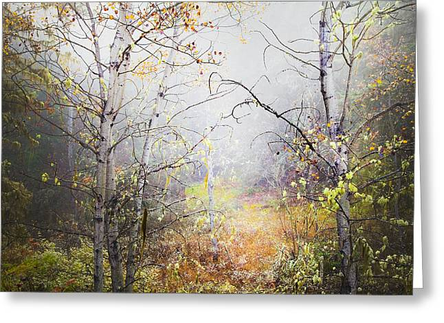 Fallen Leaf Greeting Cards - Fall Mist Greeting Card by Theresa Tahara