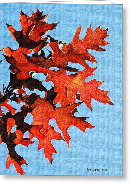 Mcc Greeting Cards - Fall Oak Leaves Greeting Card by Tom Janca