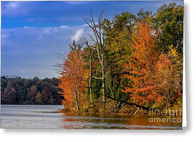 Nature Center Pyrography Greeting Cards - Fall on Beaver Lake Greeting Card by Rebecca Brooks
