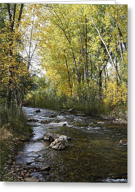 Fall On Rapid Creek Greeting Card by Renee Bryant