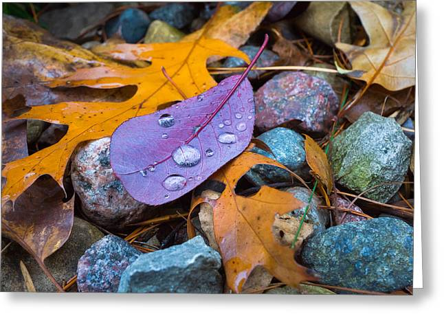 Stone Ground Greeting Cards - Fall On the Rocks Greeting Card by Bill Pevlor