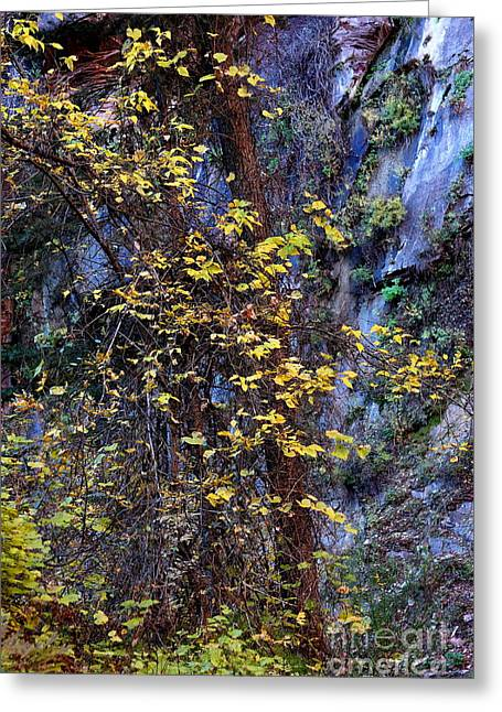 West Fork Greeting Cards - Fall on the West Fork Trail Greeting Card by Ruth Jolly
