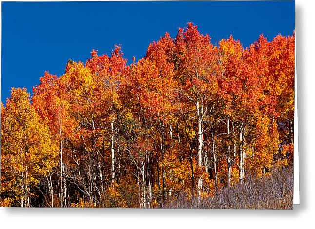 Scenic Drive Greeting Cards - Fall Orange Greeting Card by Teri Virbickis