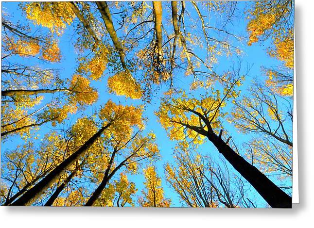 Colorful Trees Greeting Cards - Fall Over Greeting Card by Diana Angstadt