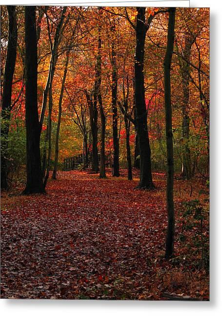 Manasquan Reservoir Greeting Cards - Fall Path Greeting Card by Raymond Salani III