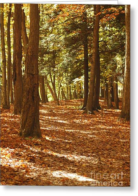 Gold Leave Greeting Cards - Fall Pathway Greeting Card by Kathleen Struckle