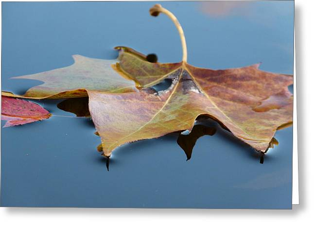 Fall Reflections Greeting Card by Jane Ford