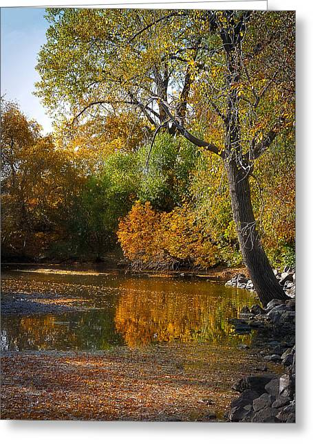 Tree Leaf On Water Greeting Cards - Fall Reflections Greeting Card by Lucinda Walter
