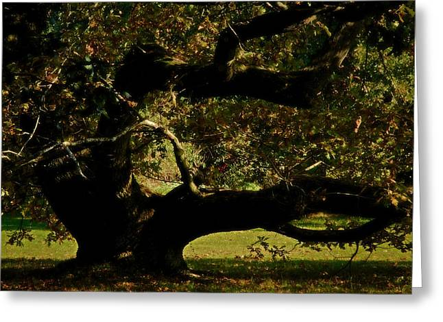 Gnarly Photographs Greeting Cards - Fall Rising Greeting Card by Odd Jeppesen