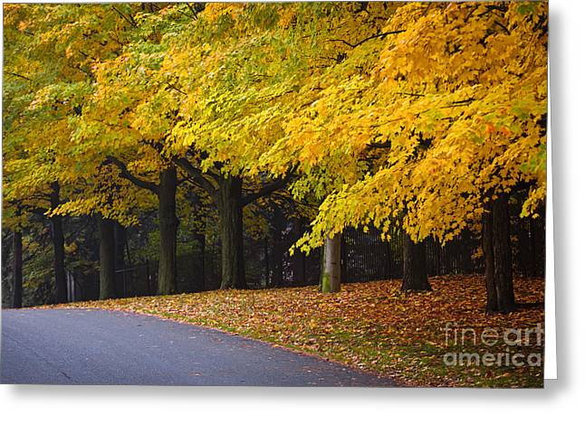Turning Leaves Photographs Greeting Cards - Fall road and trees Greeting Card by Elena Elisseeva