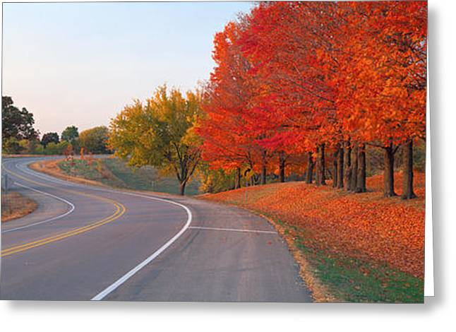 Roadway Greeting Cards - Fall Road Il Greeting Card by Panoramic Images