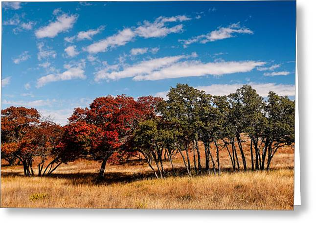 Hamilton Pool Texas Greeting Cards - Fall Scene in the Texas Hill Country - Reimers Ranch Hamilton Pool Road - Texas Greeting Card by Silvio Ligutti