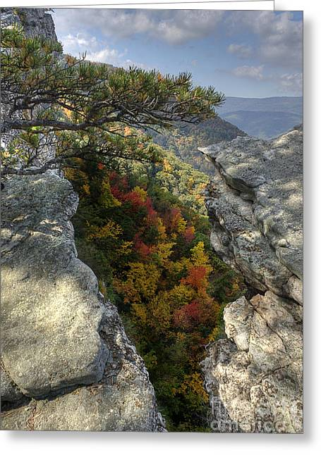 North Fork Greeting Cards - Fall scene on North Fork Mountain Greeting Card by Dan Friend