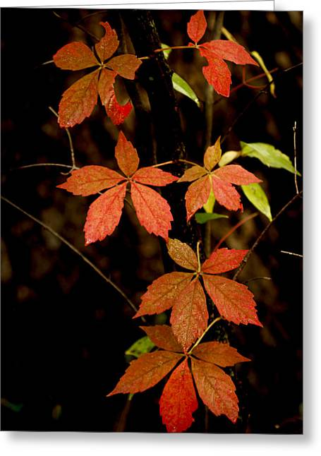 Recently Sold -  - Runner Greeting Cards - Fall Greeting Card by Scott Bean