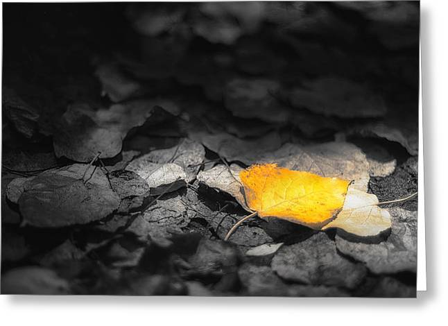 Fall Greeting Card by Scott Norris