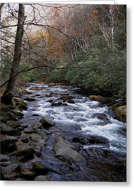 Trout Stream Landscape Greeting Cards - Fall Seclusion Greeting Card by Skip Willits