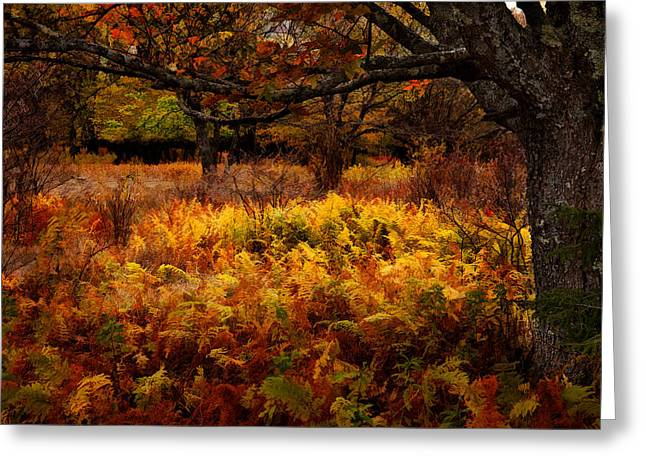 Abstract Art Prints Digital Art Greeting Cards - Fall Shadows - Dolly Sods West Virginia Greeting Card by Dan Carmichael